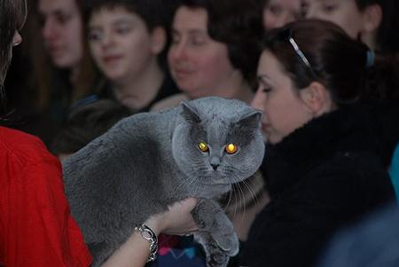 expozitie-pisici-32