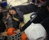 Momente dramatice la Delfinariu. O echipă de specialiști s-a luptat pentru ca delfinului Ni Ni să-i fie mai bine