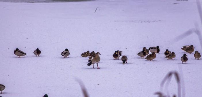 Sunteți rugați să hrăniți păsările din Microrezervația Constanța